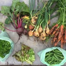 Ann's crop